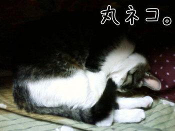 まんまるちゃー(文字).jpg