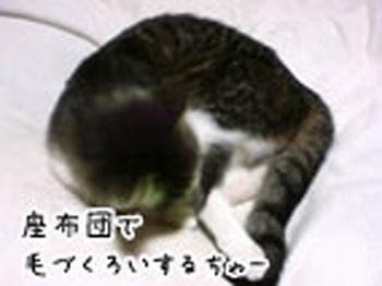 座布団とちゃー(文字).jpg